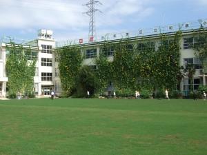 校舎側芝刈りグループ