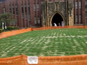 安田講堂前広場の芝生
