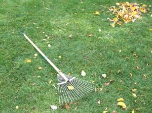 落ち葉の掃除