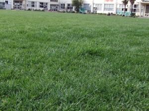 芝生の様子