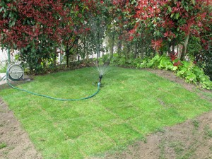 築山の芝生植え作業