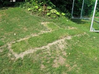 築山の芝生