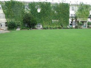 芝生と緑のカーテン