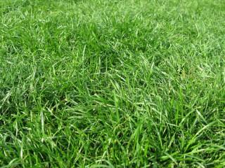 芝生の校庭
