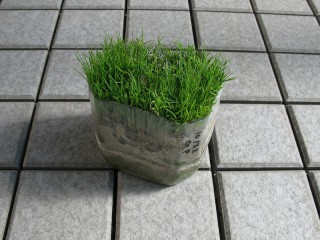 ペットボトル芝生
