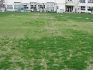 養生エリアの芝生のようす