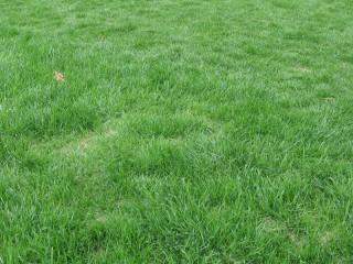 芝生のようす