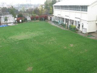 体育館側の芝生のようす