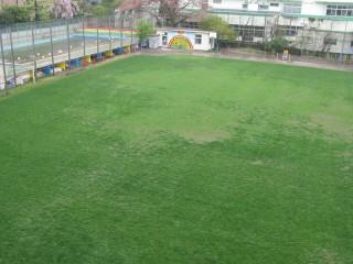 プール側の芝生のようす