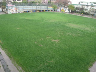 校庭の芝生のようす
